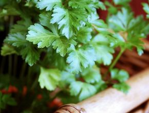 8 Health Benefits of Parsley