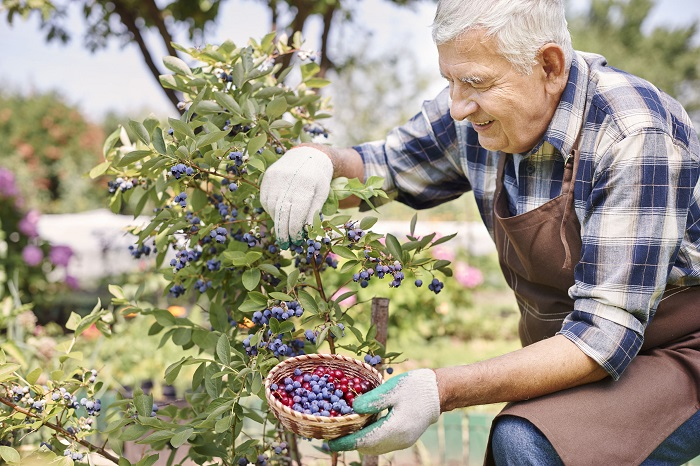Gardening as a Stress Reliever for Active Adults