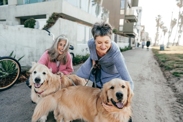 Factors to Consider before becoming a Dog Owner