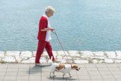 30113931 - senior woman walking her dog