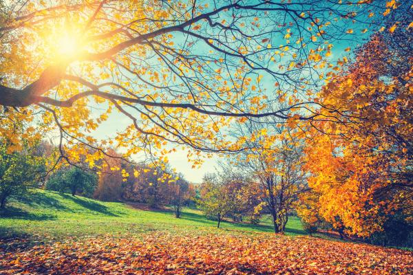 The Three H's of Autumn